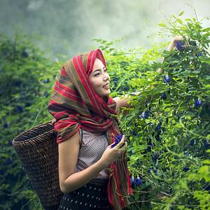 agriculture, cambodia, culture