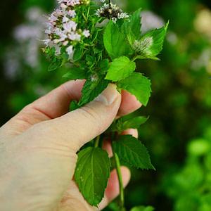 culinary herbs, herbs flowers, garden
